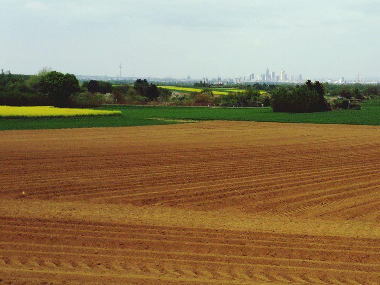 Skyline Frankfurt Fields
