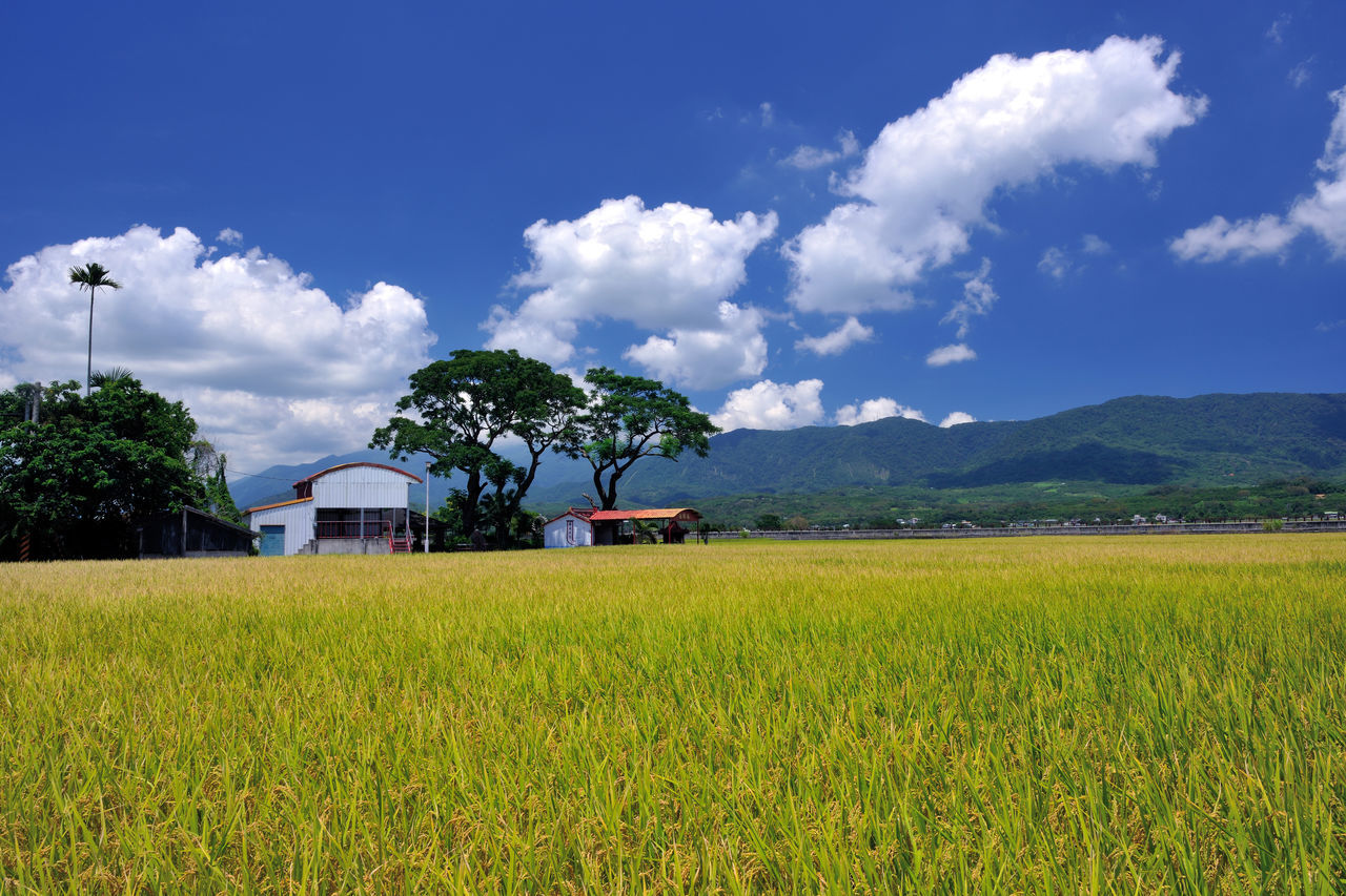 field, agriculture, growth, landscape, nature, sky, day, tranquil scene, tree, outdoors, tranquility, beauty in nature, no people, scenics, plant, rural scene, cloud - sky, architecture, built structure, grass, mountain