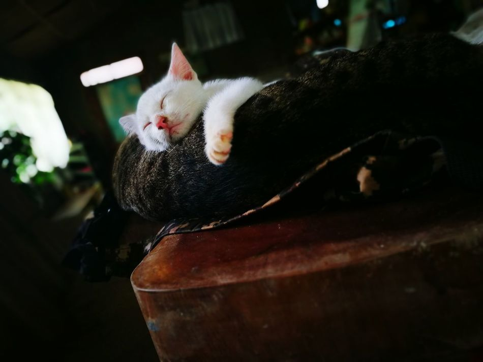 Cute Cat 😻 Cute Cats (>^ω^<) Cat Photography Leisure