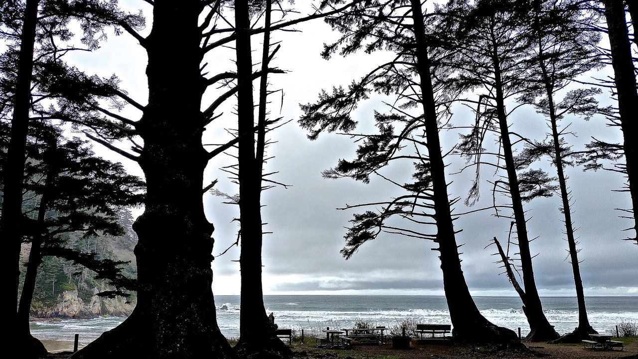 Backlit Bare Tree Dead Plant Escapism Forest Getting Away From It All Nature No People Olympic National Park Outdoors Rialtobeach Silhouette Tranquil Scene Tranquility Tree Tree Trunk