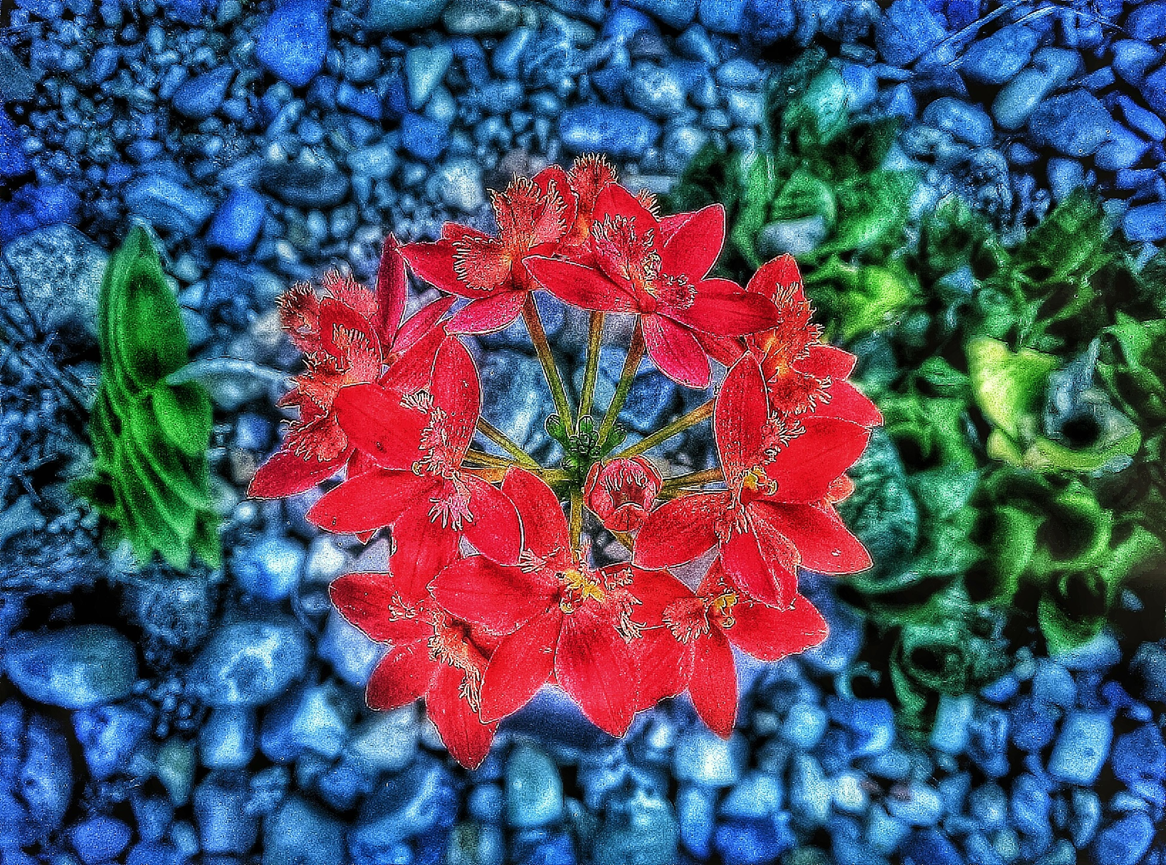 red, fragility, close-up, nature, flower, high angle view, growth, beauty in nature, season, textured, petal, pattern, autumn, full frame, day, leaf, plant, backgrounds, vibrant color, outdoors
