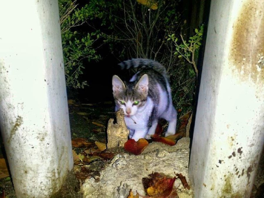 Cat Name Romy Little Cats A Feral Cat Cat Lovers Nature Photography Seoukchon Lake Cats Alley Cat
