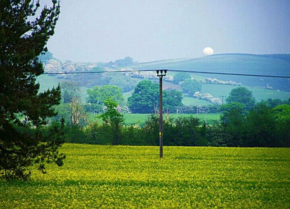 Nature_collection EyeEm Best Shots - Nature EyeEm Nature Lover Full Moon SummerNights Green And Sky Sky_ Collection Beatiful Nature Peaceful Evening Nature Harmony