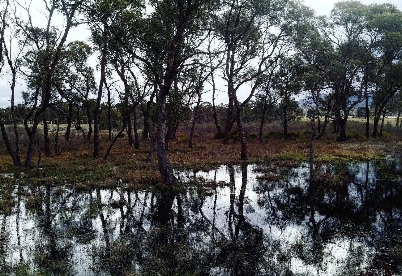 DXO IPhone Landscape Reflection