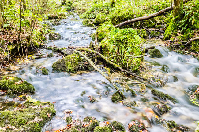 Beauty In Nature Blurred Motion Environment Flowing Flowing Water Forest Green Color Idyllic Langzeitbelichtung Long Exposure Moss Motion Nature Non-urban Scene Outdoors Plant River Riverside Rock - Object Scenics Stream Tranquil Scene Water Waterfall Waterfront