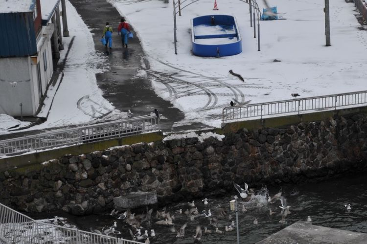 After giving to feed Aquarium Seabirds Seaside My Country In A Photo Sealion  ClubD300 It's Cold•••