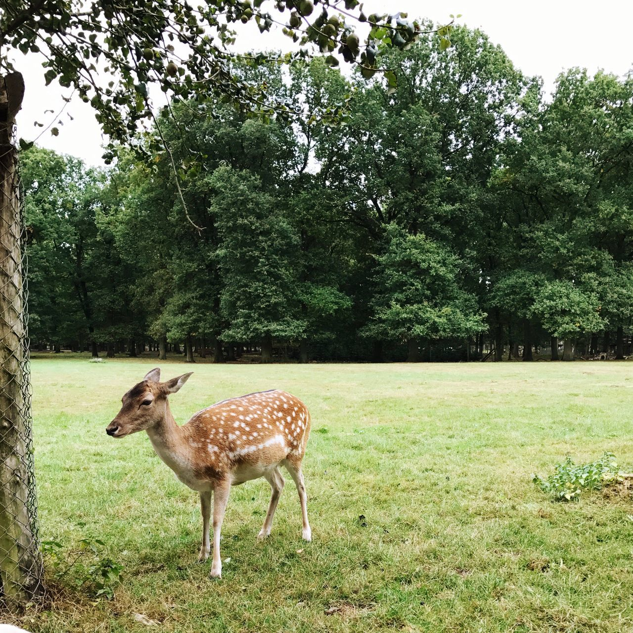 tree, animal themes, one animal, day, field, mammal, nature, no people, standing, grass, full length, animals in the wild, growth, outdoors, beauty in nature