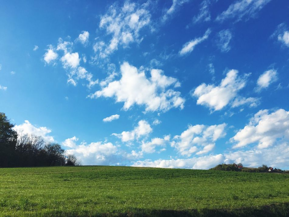 Springtime sunny fields. Grass Field Landscape Rural Scene Sky Nature No People Tranquility Beauty In Nature Green Color Day Scenics Growth Tranquil Scene Outdoors Cloud - Sky Springtime Green