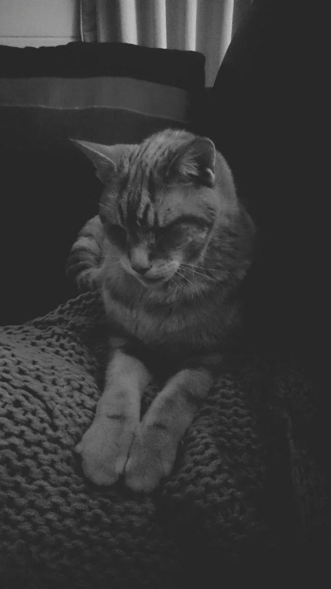King Oscar King Oscar The Cat