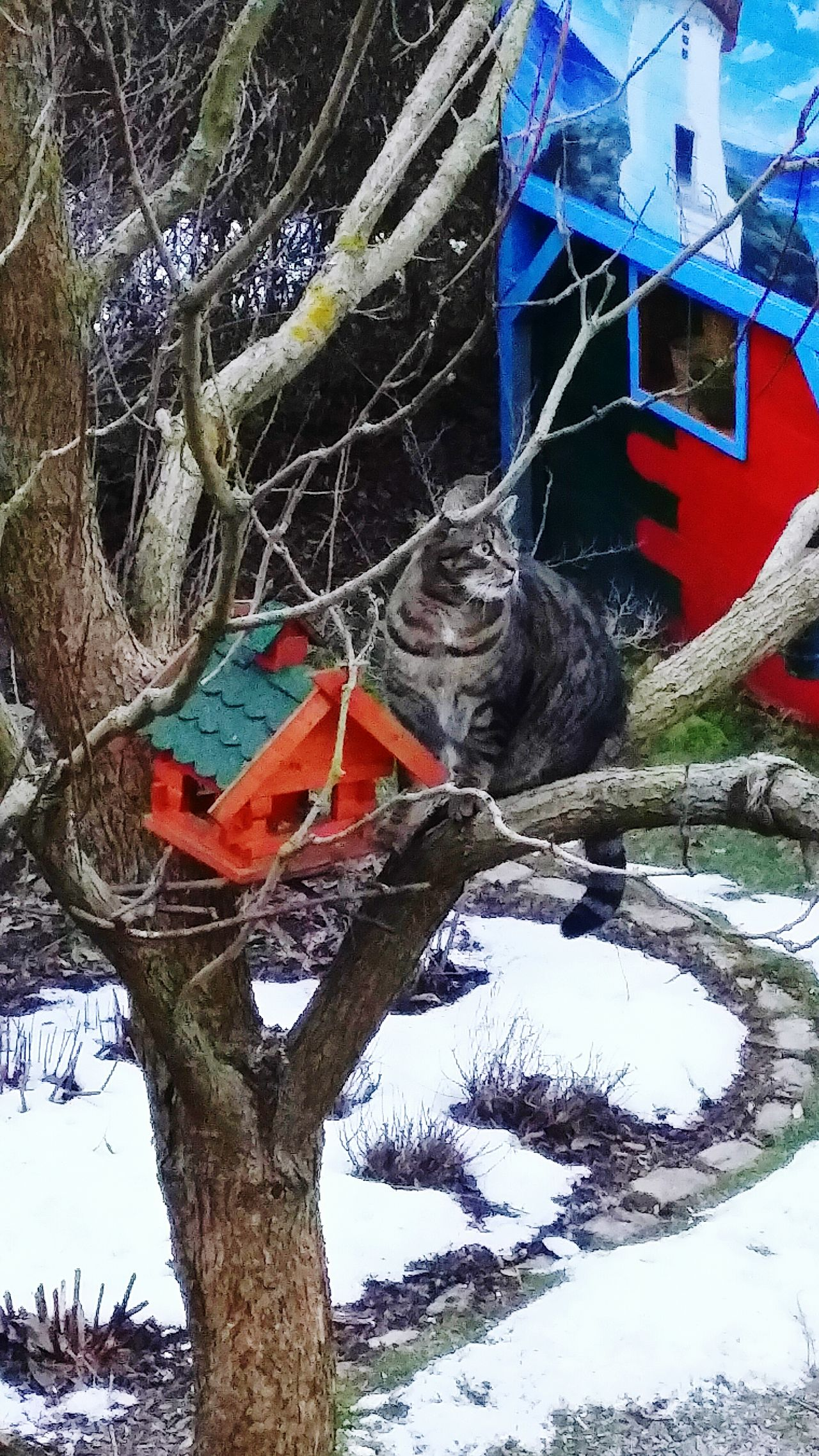 Crazy...our cat is waiting in the tree for the birds...für Anika, werde schnell gesund!! 😻😺🐈🐦😙💖 @Mandy173 day Outdoors Germany My Garden @my Home Ladyphotographerofthemonth Focus On Foreground The Purist (no Edit, No Filter) Cats 🐱 Cat Domestic Cat Cats Of EyeEm Catsoneyeem Animal Wildlife Animal Themes One Animal Tree