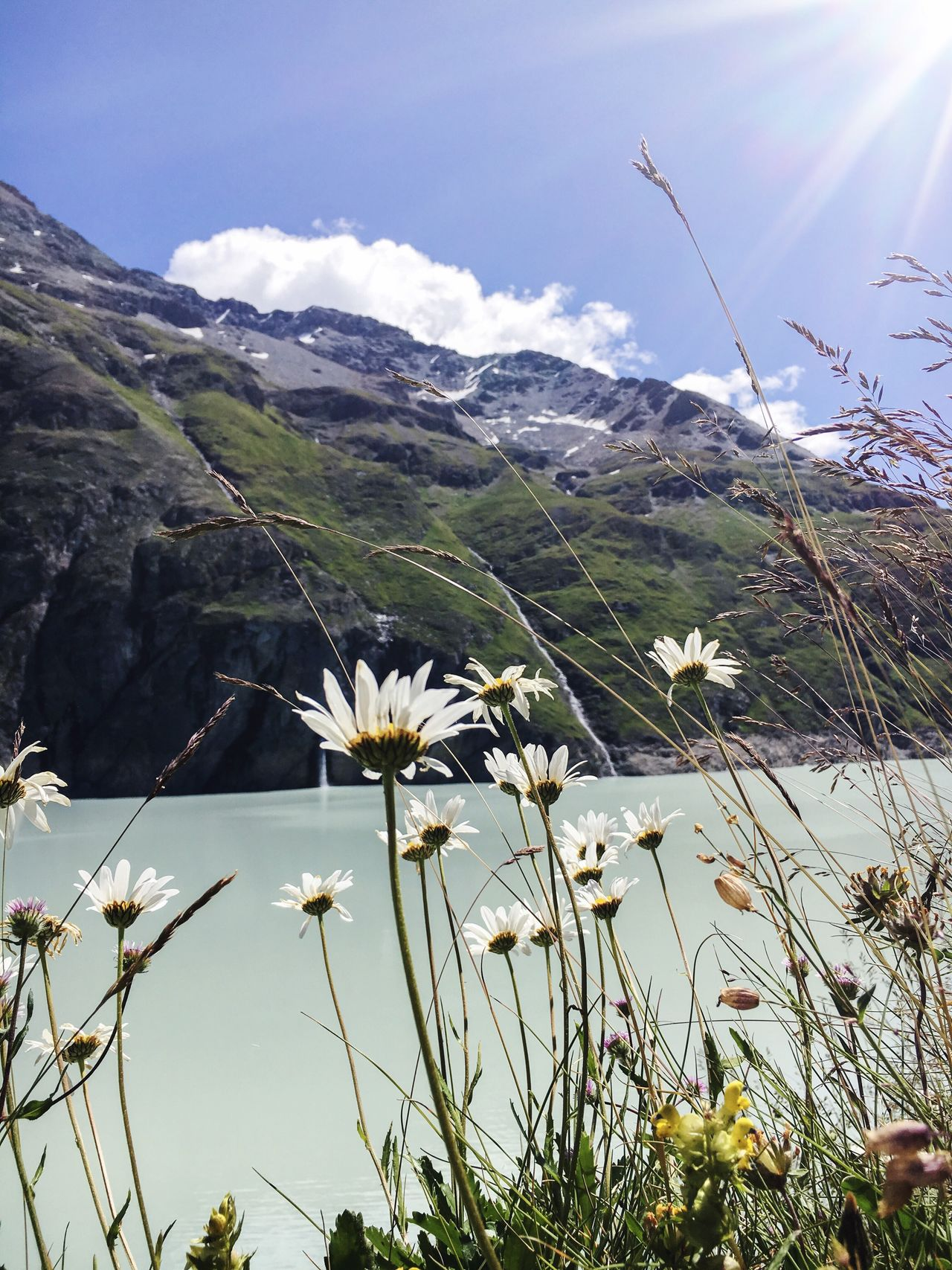 Flower Fragility Freshness Daisy Beauty In Nature Growth Plant White Color Mountain Nature Water Stem Petal Sky Daisies Wildflower Flower Head Cloud Non-urban Scene Day Col Des Roux 2800metrs High Altitude Lac Des Dix Switzerland