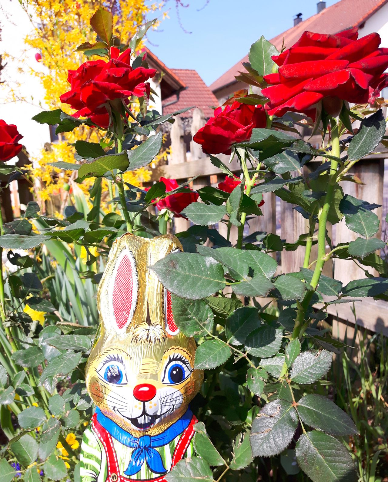 Ich wünsche euch einen wunderschönen Nachmittag. Day Close-up Multi Colored Flowers, Nature And Beauty Beliebte Fotos Eyem Collection Germany🇩🇪 EyeEm Best Shots Ostern Easter Ostern 2017 Easter Bunny Rose Collection Roses Flowers  Roses🌹 Rose🌹 Bayern Germany