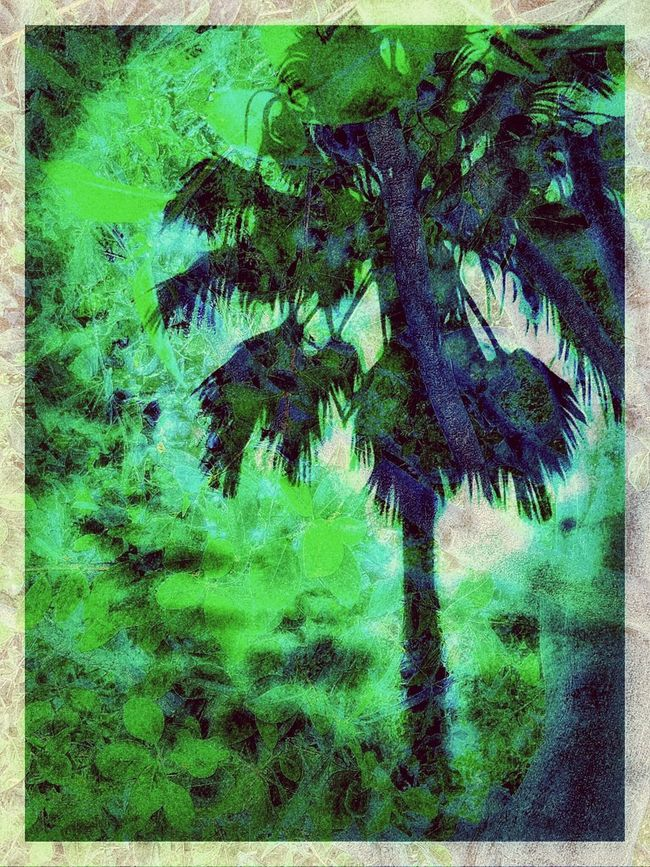 (Green and Blue) one palm and one tree - special effects I just enjoy for working my art and photo ...