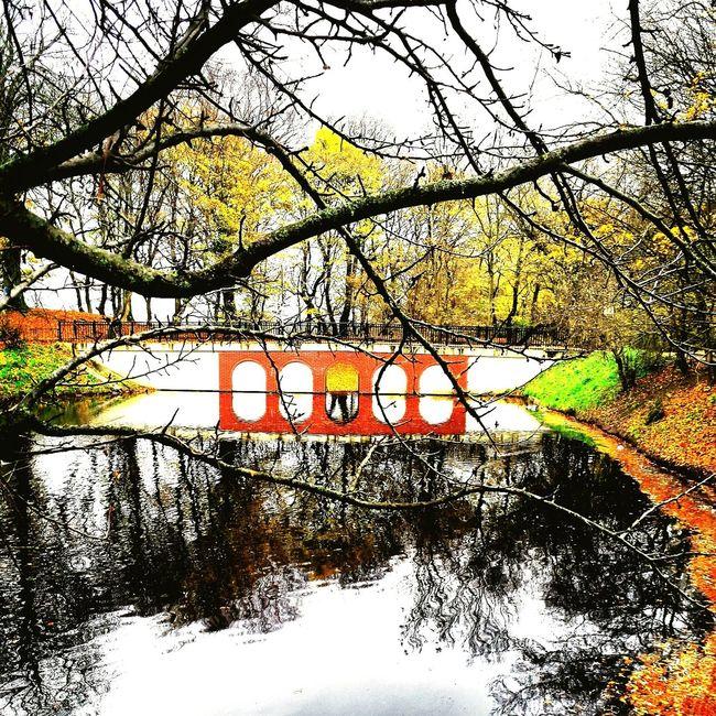 Autumn Autumn Colors Autumn Collection Autumn Leaves Poland Amazing Poland Nature On Your Doorstep Nature Nature_collection Nature Photography Park Lake Bridge Bridges_aroundtheworld