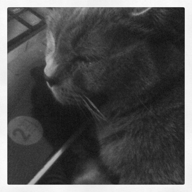 Il Grisu dorme sul mio pc Cute Cat Grisu Goodnight