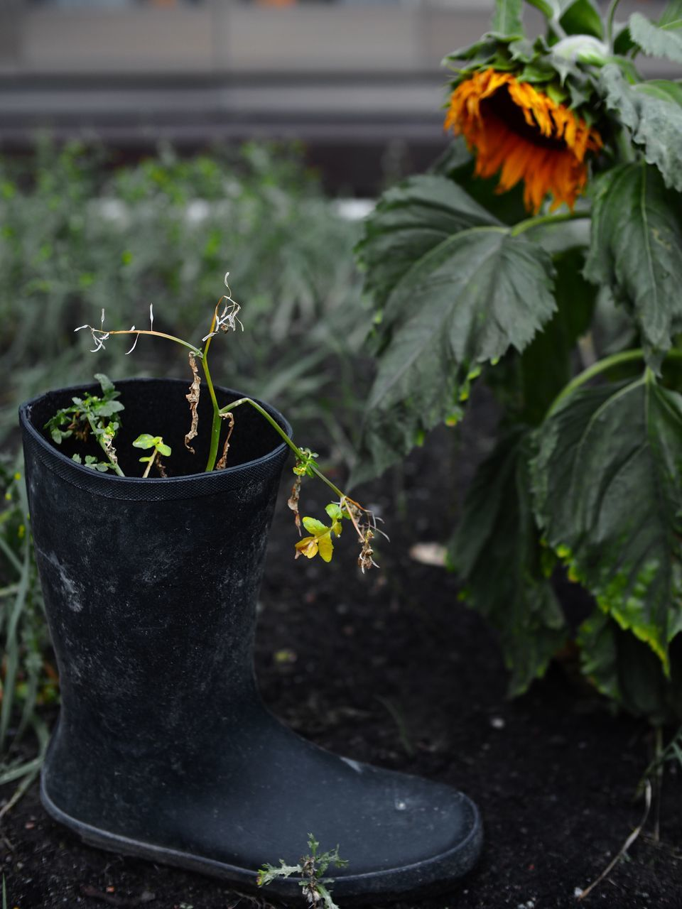 growth, plant, potted plant, leaf, nature, day, no people, outdoors, close-up, fragility, freshness