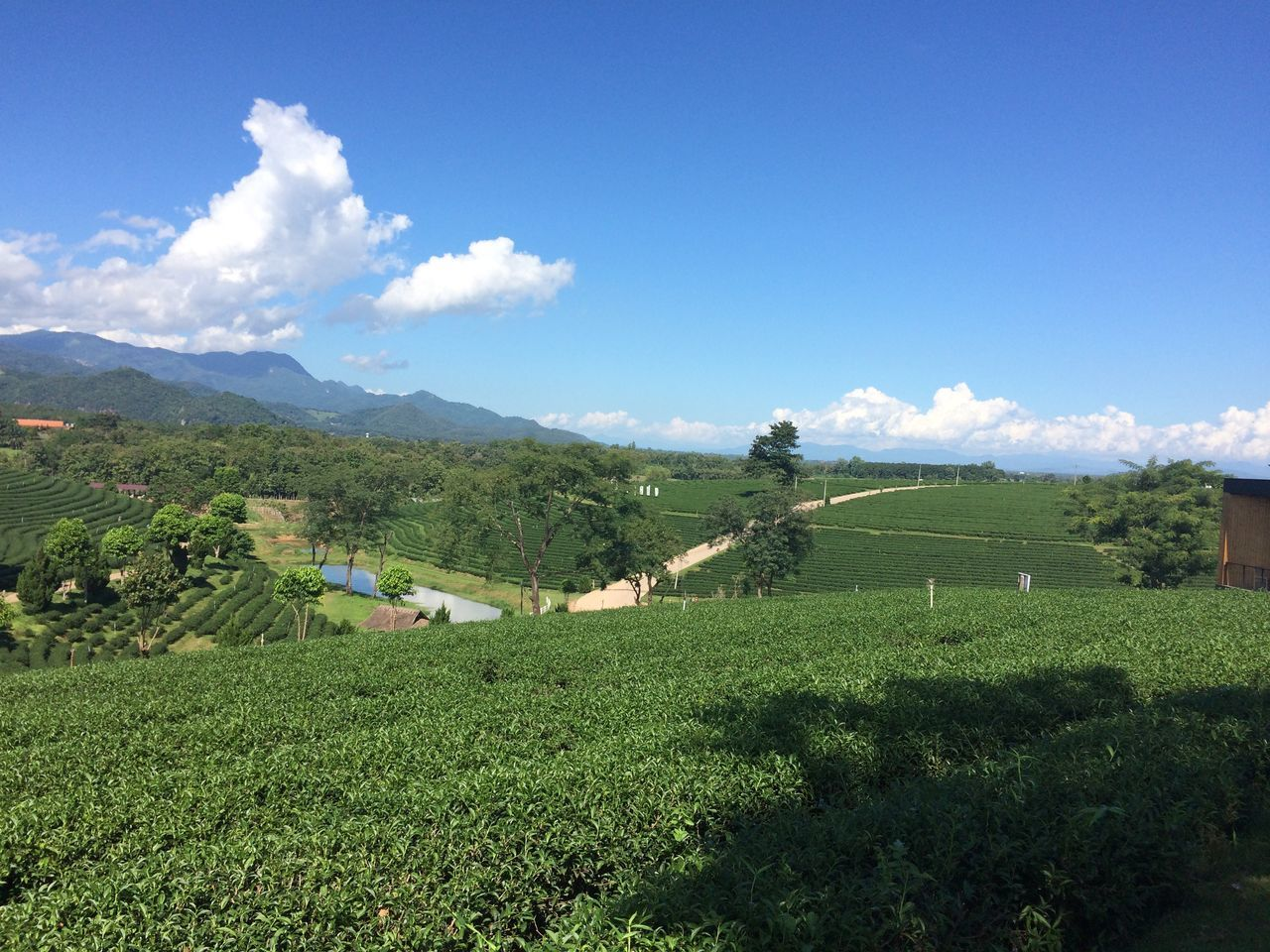 Agriculture Farm Field Mountain Day Landscape Sky Cultivated Land Crop  Nature Rural Scene Beauty In Nature Scenics Outdoors Growth Tranquil Scene Cloud - Sky Green Color No People Tranquility Tea Plant