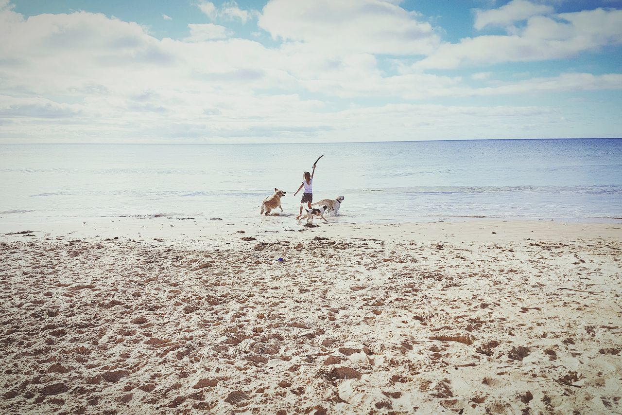 Fetching The Stick Fetch Beach Sea Horizon Over Water Sand Nature Animal Themes Sky Outdoors Water Scenics Beauty In Nature Day Child Portrait Lifestyle Photography Lifestyle Australian Culture Childhood Dogs Dog Exercise Australia Australian EyeEmNewHere The Portraitist - 2017 EyeEm Awards