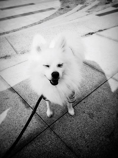 My pet dog Weenie 😝 - Photo by Iphone 6