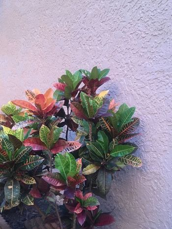 Beauty In Nature Plant Leaf Growth Wall - Building Feature Flower Green Color No People Potted Plant Nature Fragility Architecture Day Blooming Built Structure Outdoors Flower Head Freshness Close-up Periwinkle EyeEmNewHere The Week On EyeEm Mix Yourself A Good Time EyeEmNewHere