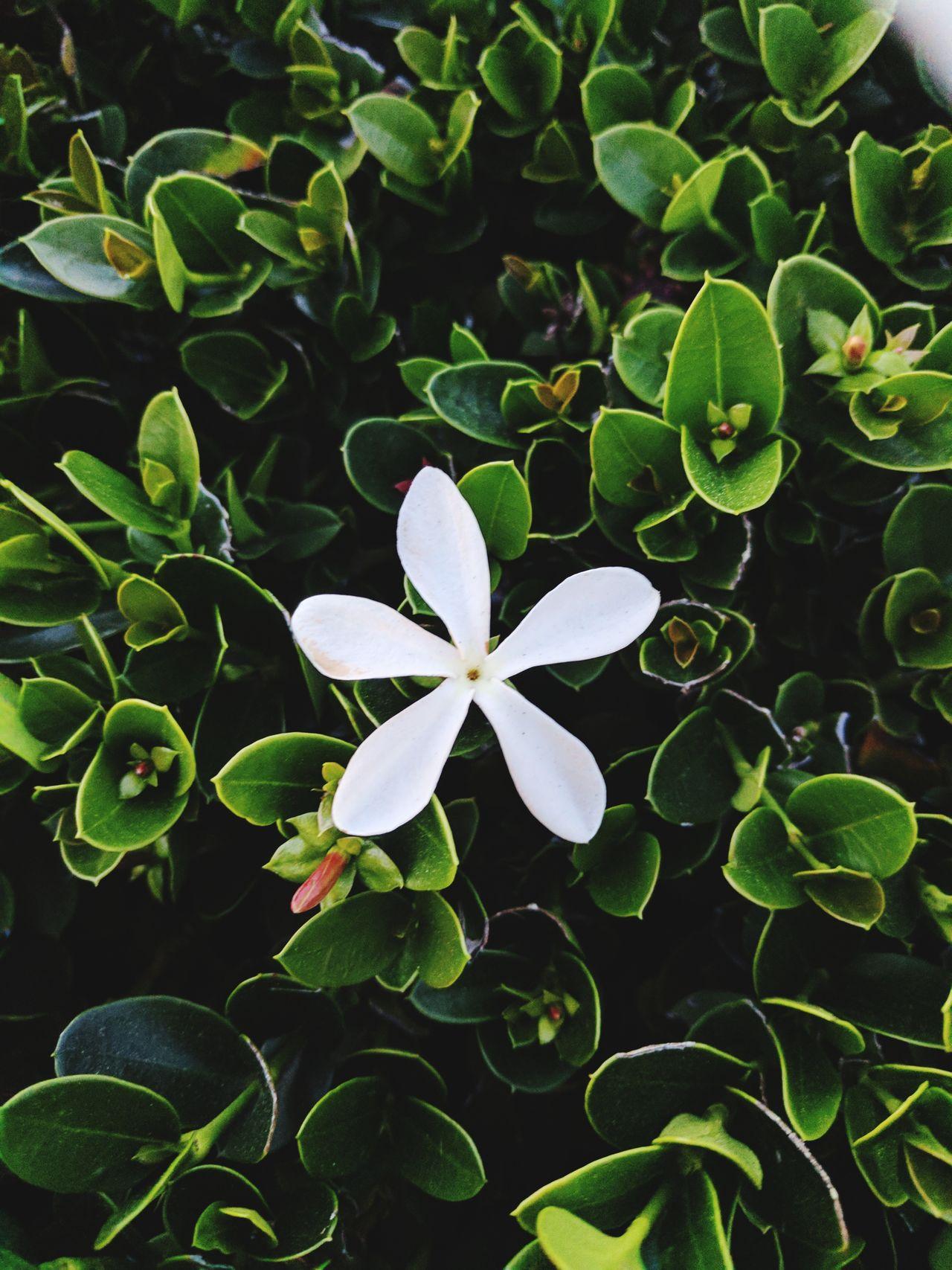 First Eyeem Photo Flower Head Flowerporn Botanical EyeEm Nature Lover EyeEmFlower Botany
