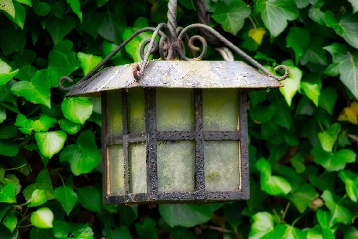 Day Outdoors Focus On Foreground No People Nature Plant Green Color Hanging Growth Beauty In Nature Close-up Lamp Oil Lamp Hanging Lanterns Lantern Check This Out EyeEmNewHere The Street Photographer - 2017 EyeEm Awards