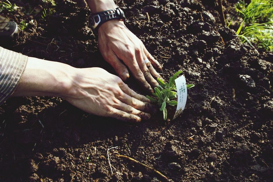 Beautiful stock photos of plant, Close-Up, Day, Gardening, Ground