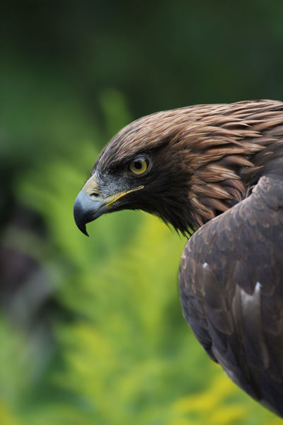 Alertness Animal Animal Themes Animals In The Wild Beak Bird Clear Sky Curiosity Danger Eagle Eye Eye4photography  EyeEm EyeEm Nature Lover Feathers Flying Green Low Angle View Mid-air No People One Animal Perching Relaxing Wildlife Zoology