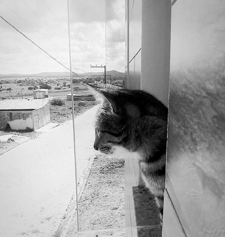 Life Lifestyle Photo Photo Of The Day First Eyeem Photo Photooftheday Lovephotography  Beautiful Cats Cats 🐱 Cats Of EyeEm Gatos Gatosfelizes Brasil ♥ Cidade Artistic City Urban Blackandwhite Sergipe Artistic Photo Artistic Photography Cute Pets Cute♡ Cute Cats Second Acts