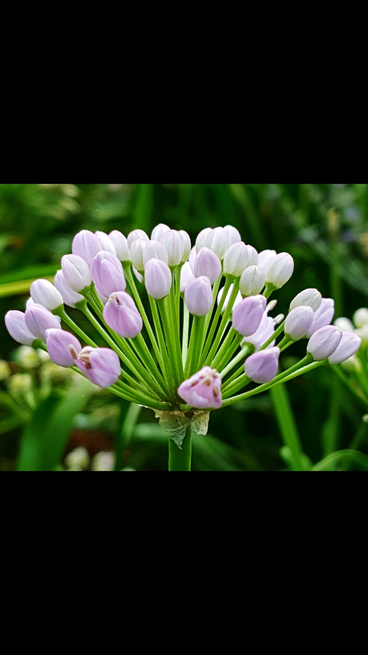 Flower Plant Petal Fragility Nature Growth Flower Head Beauty In Nature Purple Freshness No People Close-up Springtime Day Outdoors