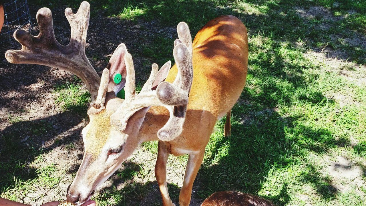 Nature On Your Doorstep Deer