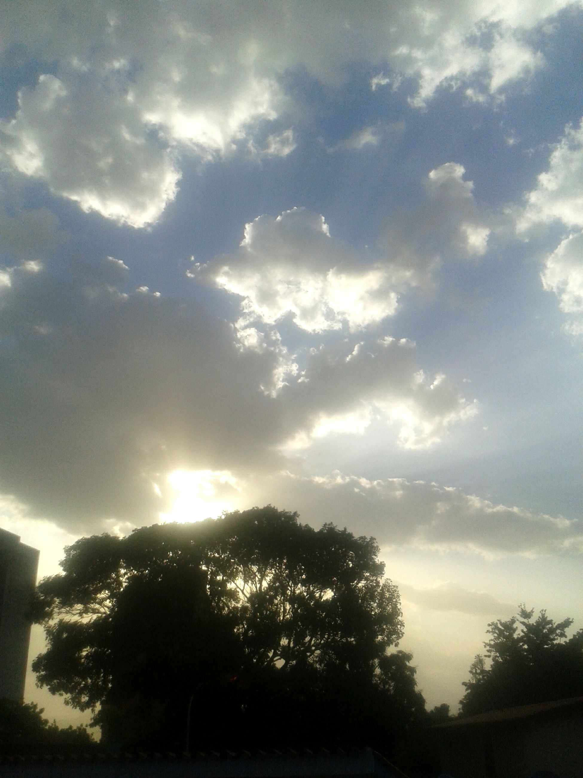 tree, sky, silhouette, cloud - sky, low angle view, beauty in nature, tranquility, nature, cloudy, scenics, cloud, tranquil scene, growth, sunlight, sunbeam, sun, branch, outdoors, sunset, no people
