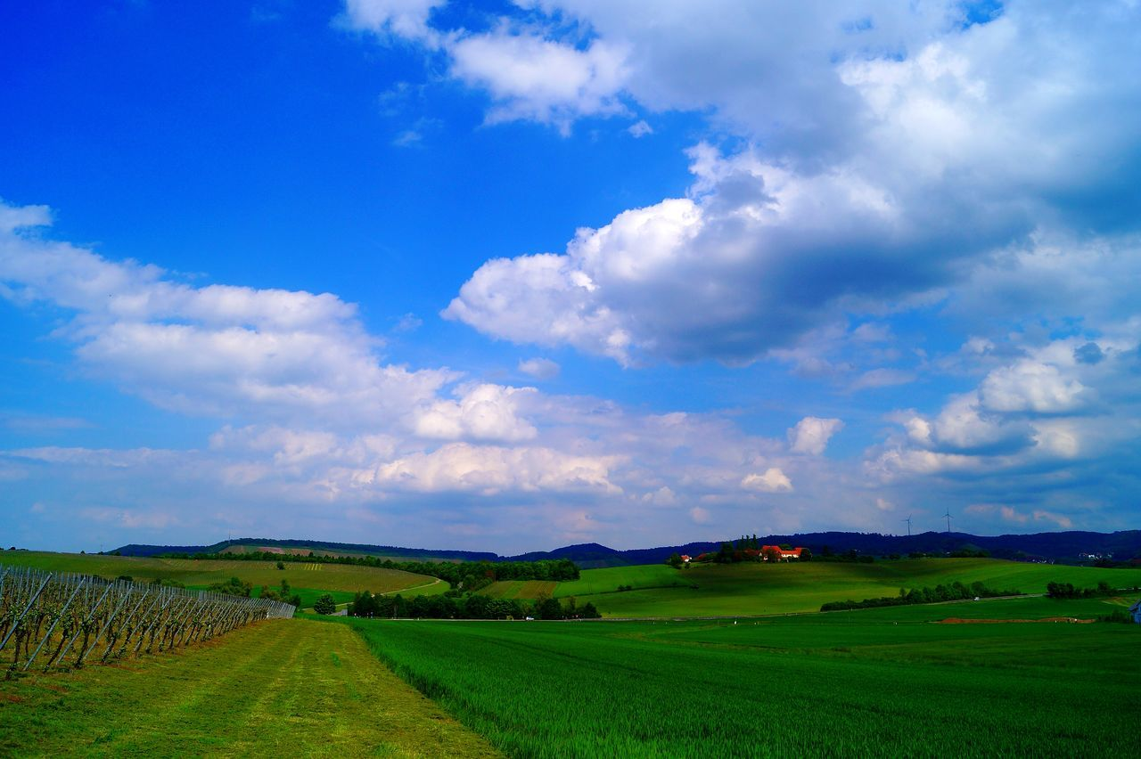 Field Cloud - Sky Landscape Beauty In Nature Nature No People Grass Outdoors Sky Photography Themes Green Color Beauty In Nature EyeEm Best Shots Landscape_Collection The Week On Eyem Löwenstein GERMANY🇩🇪DEUTSCHERLAND@ Color Photography Löwensteiner Berge Fotography Colorphotography Nature_collection Landscape_captures Beauty Blue Sky