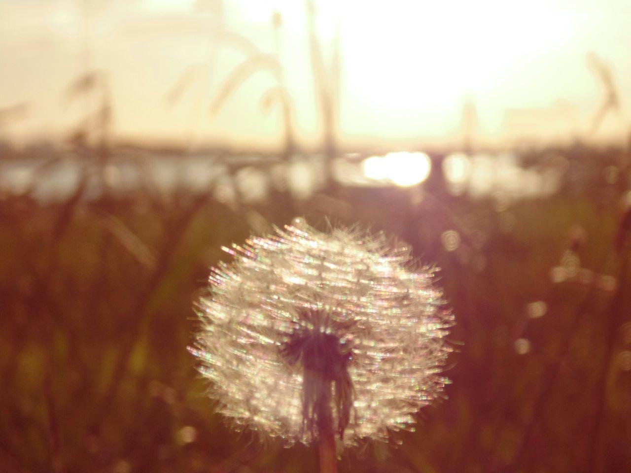 Glitch EyeEm Best Shots - No Edit Taking Photos Dandelion EyeEm Nature Lover Flower Moita The Great Outdoors - 2016 EyeEm Awards