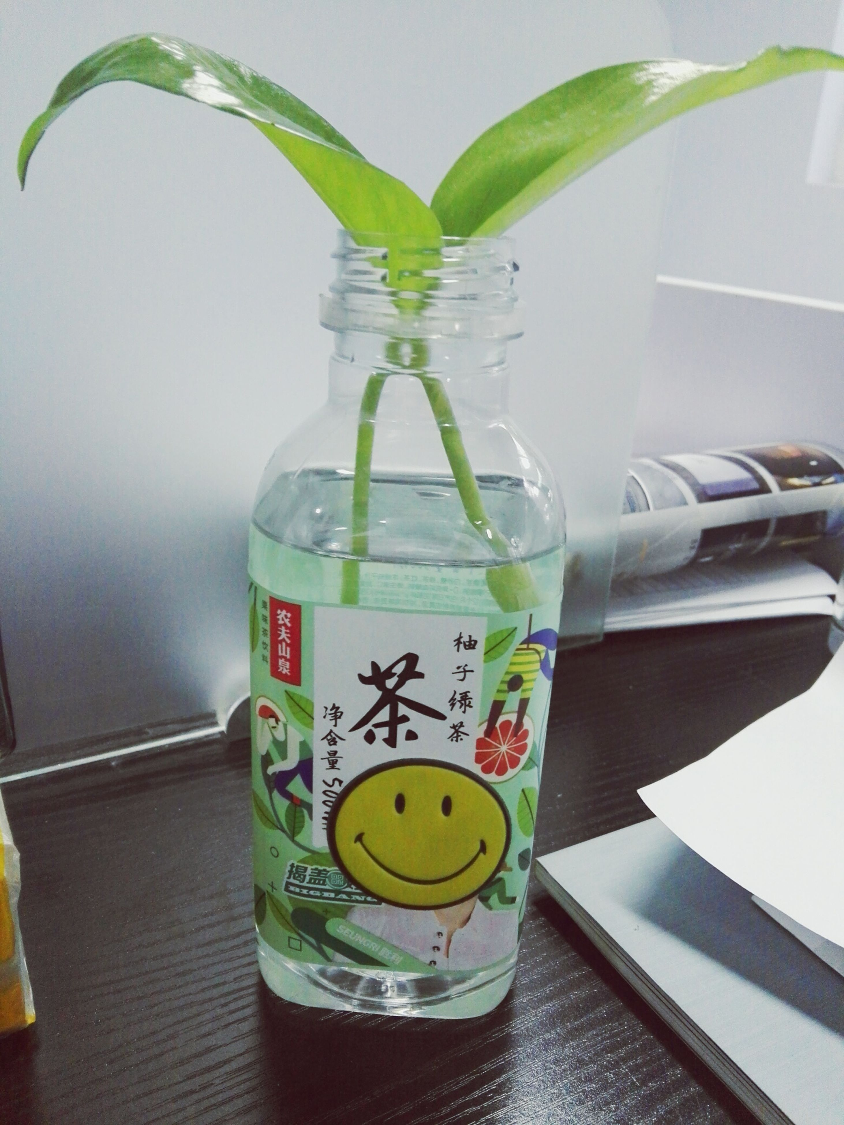 drink, refreshment, table, food and drink, bottle, drinking glass, indoors, drinking straw, lemonade, water, jar, no people, drinking water, healthy eating, freshness, close-up, green color, day, food