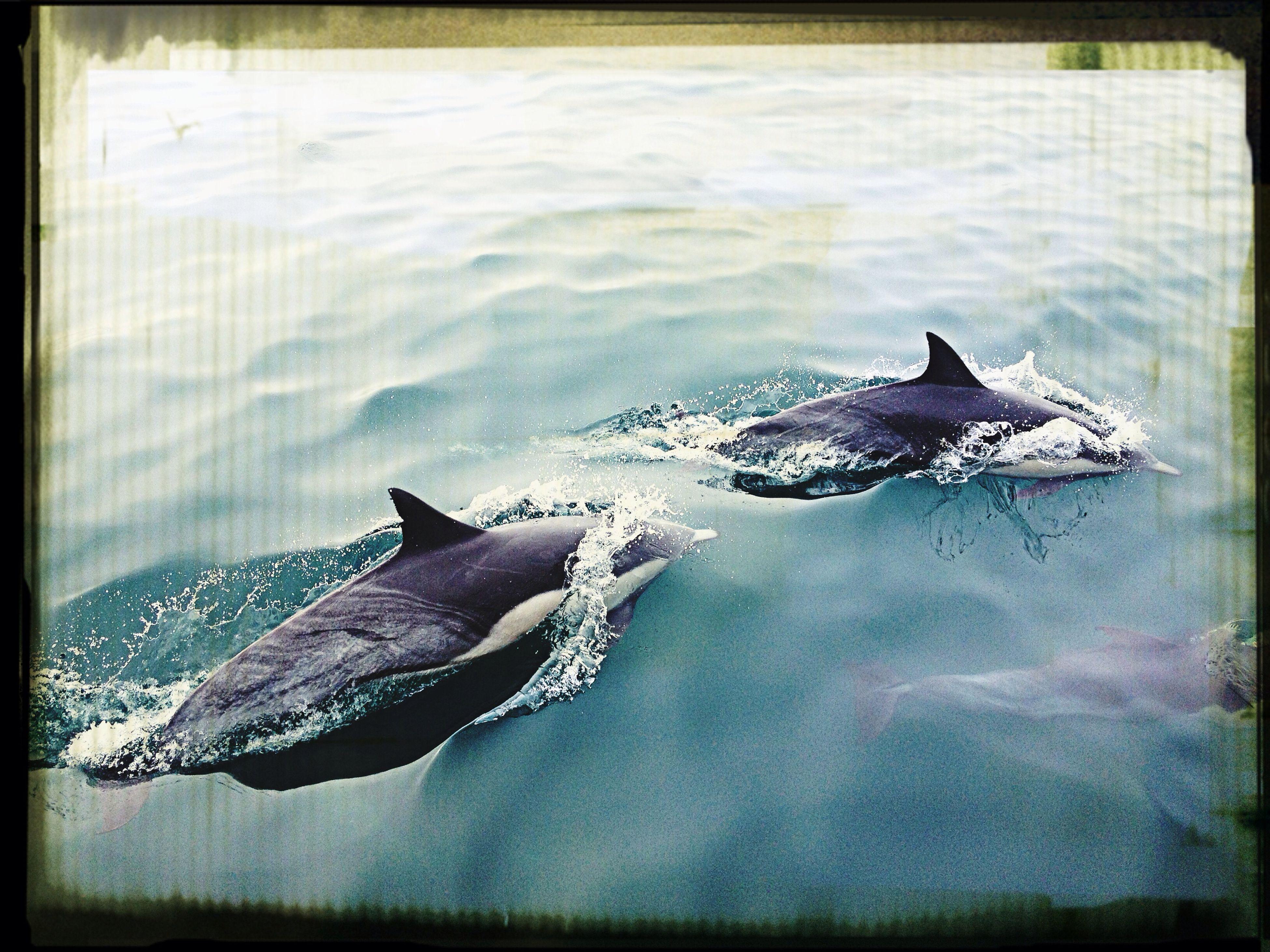 Ocean California Dolphins Amazing