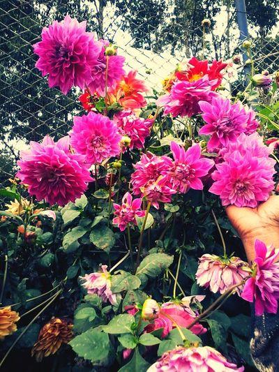 Summerholidays Flowerpower Nature'sBounty Ediqui Hillstation Wildflowers