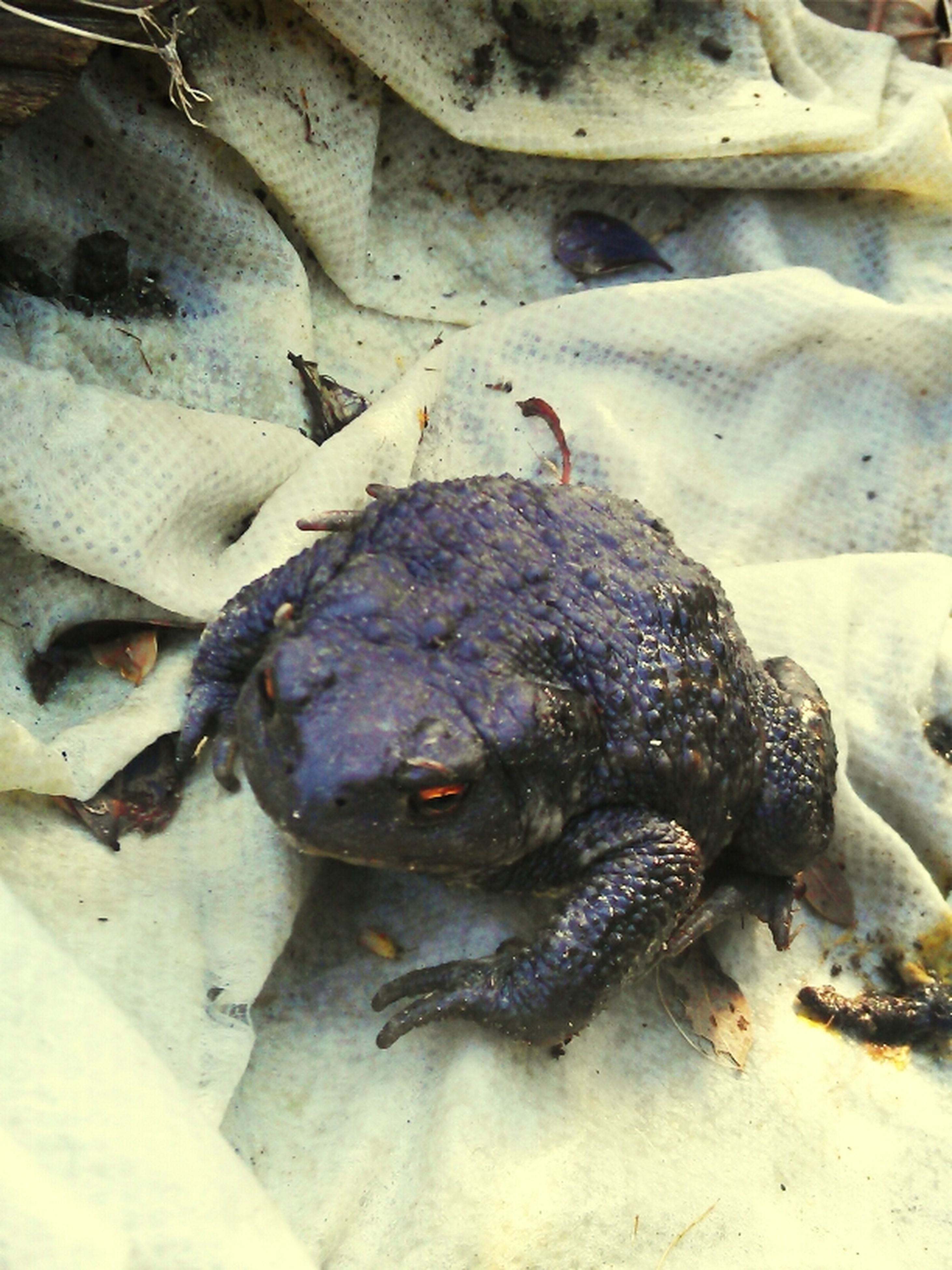 animal themes, animals in the wild, dead animal, wildlife, one animal, fish, high angle view, reptile, close-up, frog, seafood, death, amphibian, day, outdoors, zoology, no people, nature, crab, the end