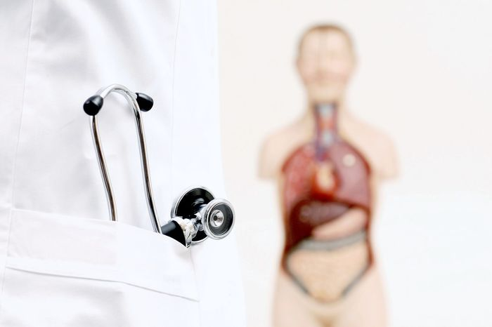 Stethoskop steckt in Arztkittel daneben steht eine Ausbildungspuppe mit sichtbaren Organen Arzt Arztpraxis Ausbildung Ausbildungspuppe Dummy Kittel Lehrpuppe Mediziner Medizintechnik Nah Nahaufnahme Person Stethoskop Weiss