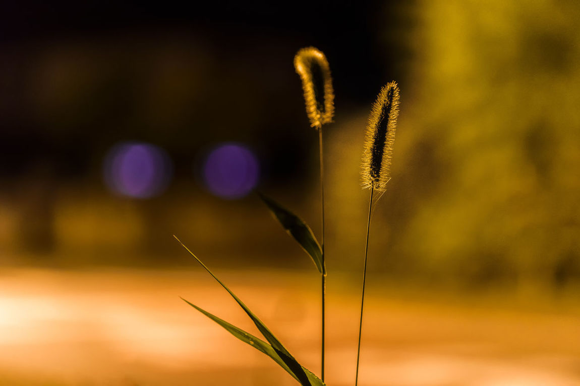 Growth Plant Focus On Foreground Tranquility Tranquil Scene From My Point Of View Night Scenics Popular Photos Nature Early Autumn 2016 Pure And Untouched (raw Image) Capture The Moment Capturing Freedom Eye4photography  Non Urban Scene Beauty In Nature Growing Shot On Nikon Nightphotography Night Lights Night View