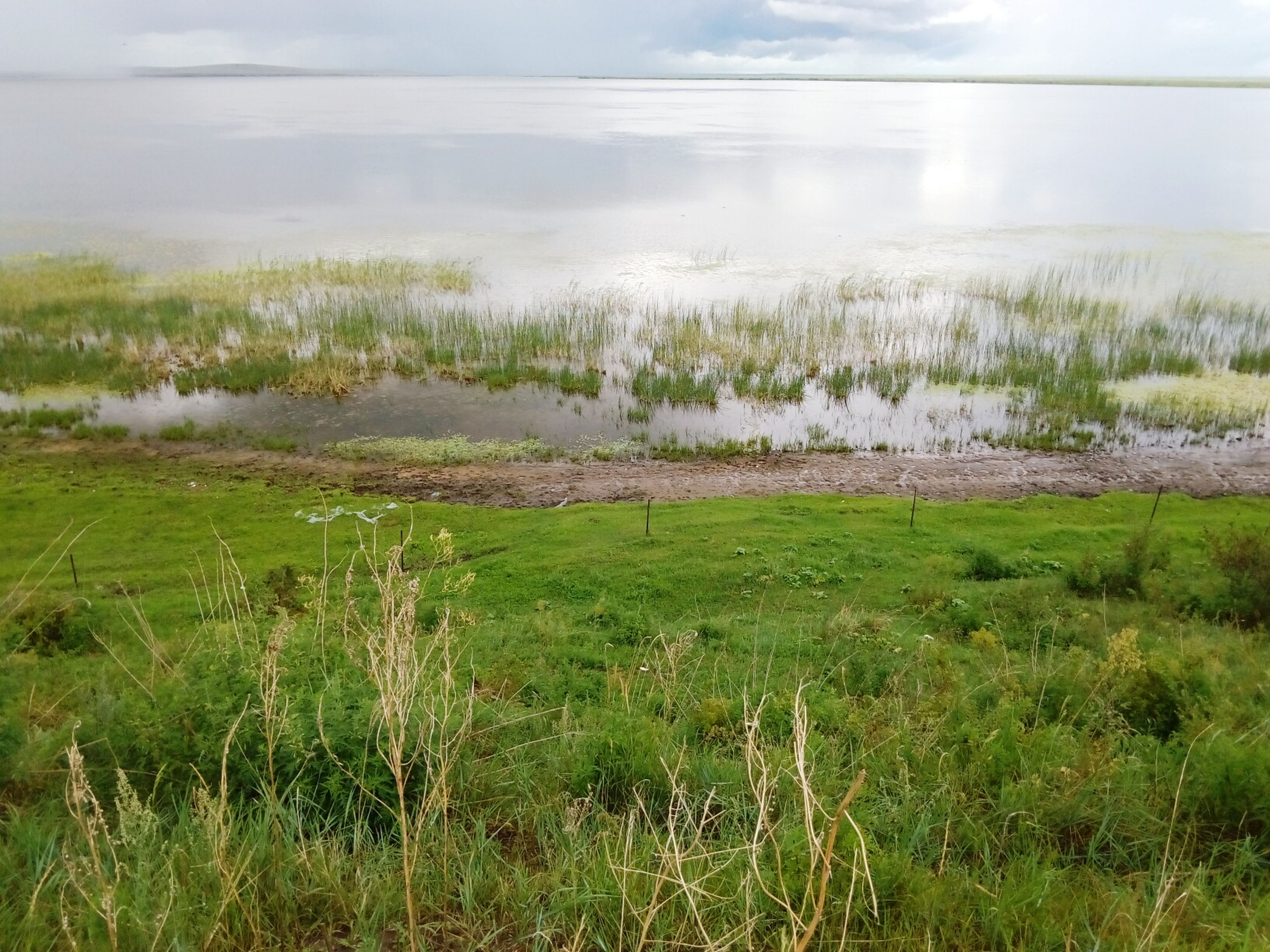 grass, tranquil scene, tranquility, water, scenics, beauty in nature, sky, nature, lake, landscape, plant, field, growth, idyllic, grassy, non-urban scene, day, cloud - sky, lakeshore, outdoors
