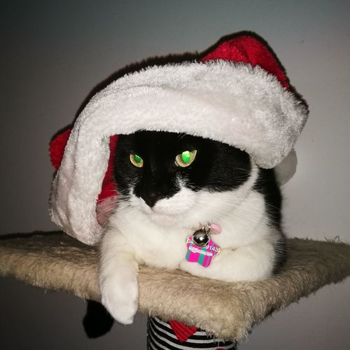 Xmas Cat Green Eyes Red One Person Adults Only Portrait Adult People Looking At Camera