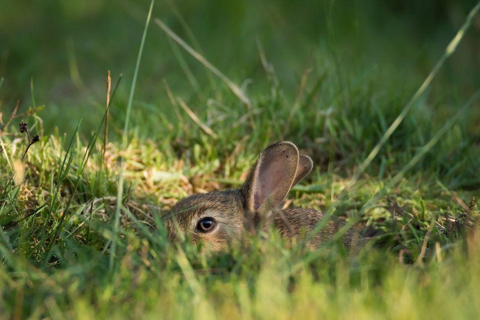 Beautiful stock photos of hasen, Animal Themes, Animal Wildlife, Animals In The Wild, Day