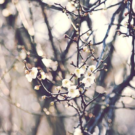 おやすみ。good nite. selamat malam.晩安。 Beautiful Good Night Photography Love Nature Keicomoment