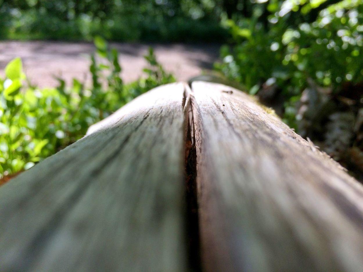 Forest Hello World Taking Photos Nature Harmony Wood Enjoying Life