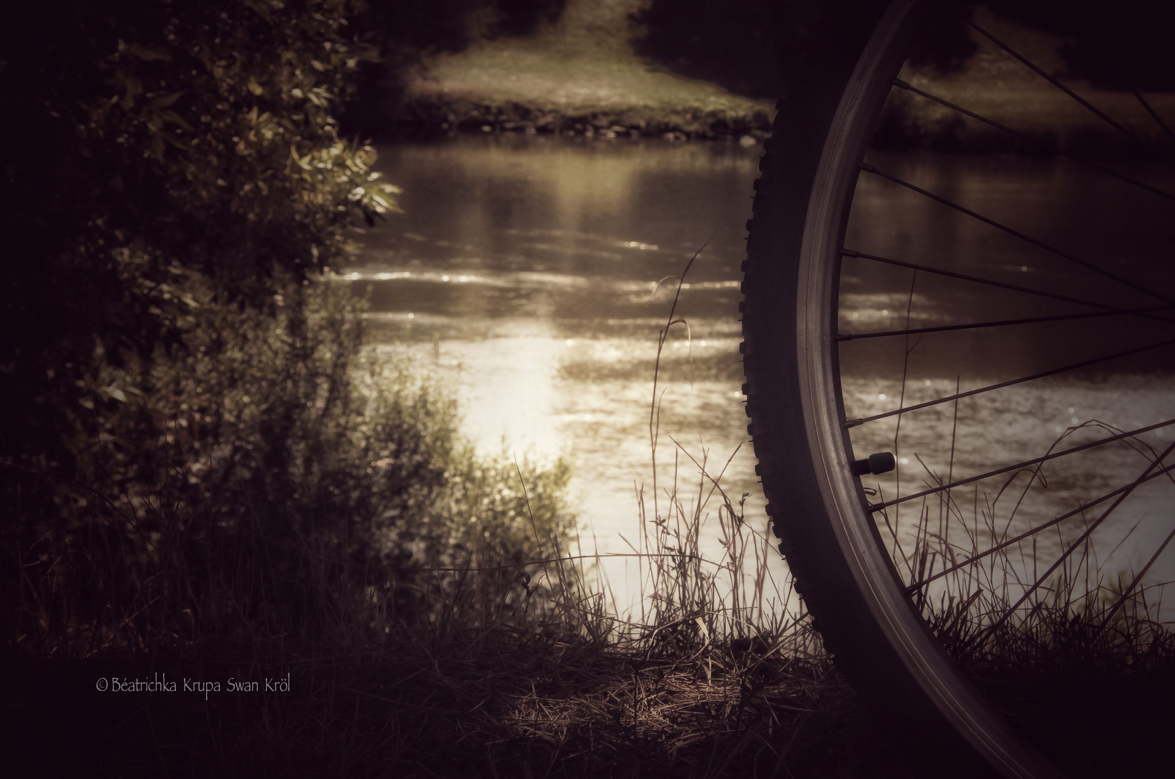 transportation, water, mode of transport, reflection, tree, lake, bicycle, land vehicle, tranquility, river, nature, tranquil scene, part of, side-view mirror, beauty in nature, travel, scenics, cropped, lakeshore, outdoors