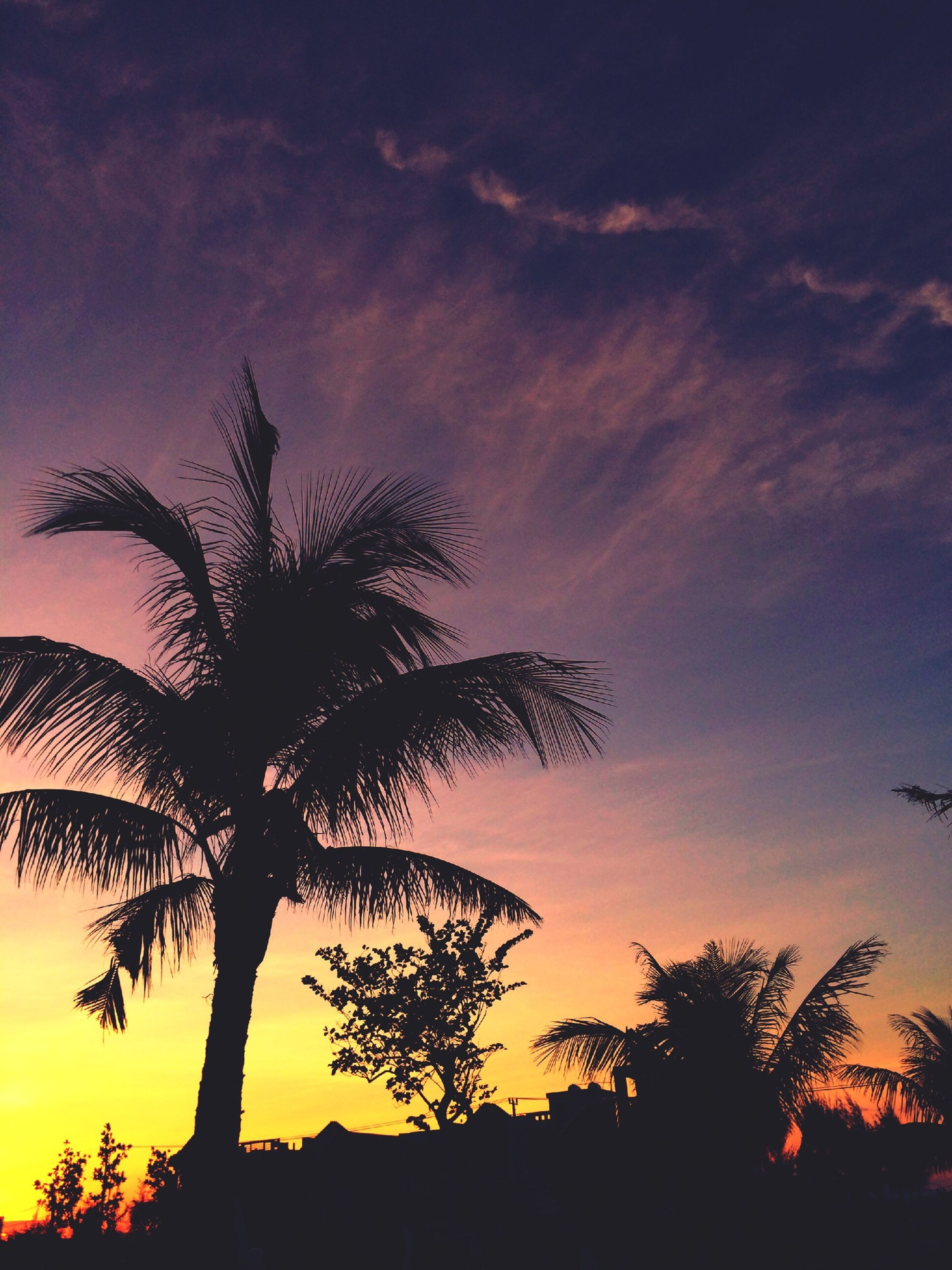 sunset, silhouette, tree, sky, tranquility, beauty in nature, tranquil scene, scenics, orange color, palm tree, nature, low angle view, idyllic, cloud - sky, growth, dramatic sky, tree trunk, branch, outline, cloud