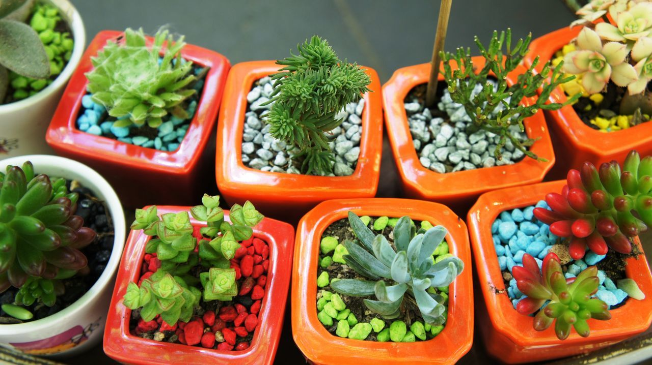 For your desktop Close-up Decorative For Sale Green Growing Growth Plant Plants And Flowers Plants Collection Potted Plant Small Plants Variation Variety Various Kinds The City Light Minimalist Architecture Art Is Everywhere
