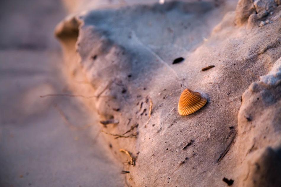 Beautiful stock photos of rock, Close-Up, Day, Nature, No People