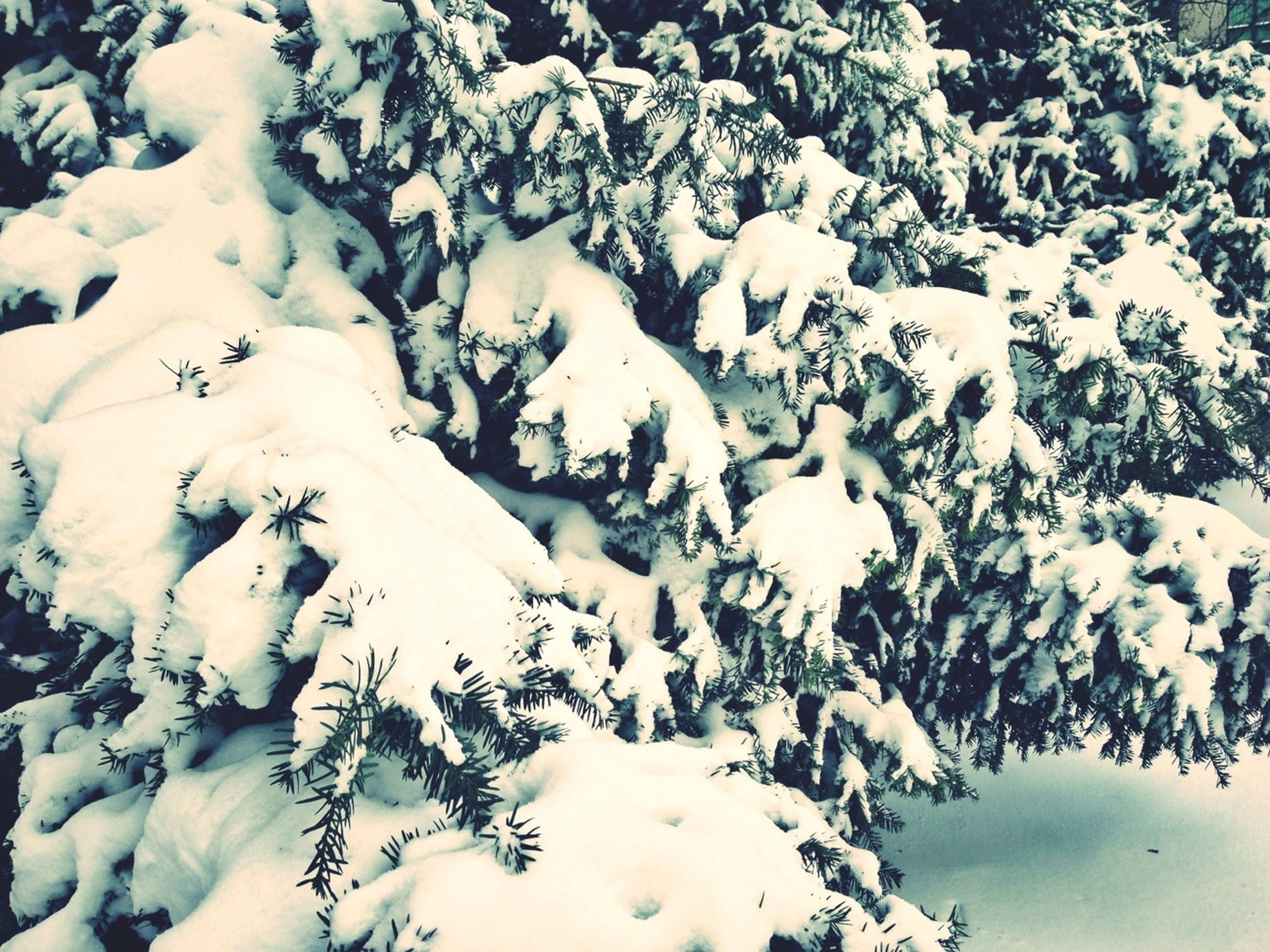 snow, winter, cold temperature, season, frozen, weather, white color, nature, tranquility, covering, high angle view, beauty in nature, tranquil scene, white, day, covered, ice, outdoors, no people, scenics